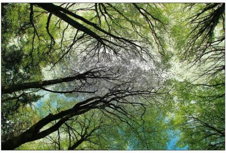 Forêt du HAUT-LANGUEDOC